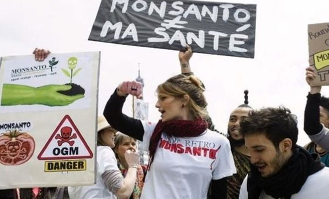 Monsanto transgenicos