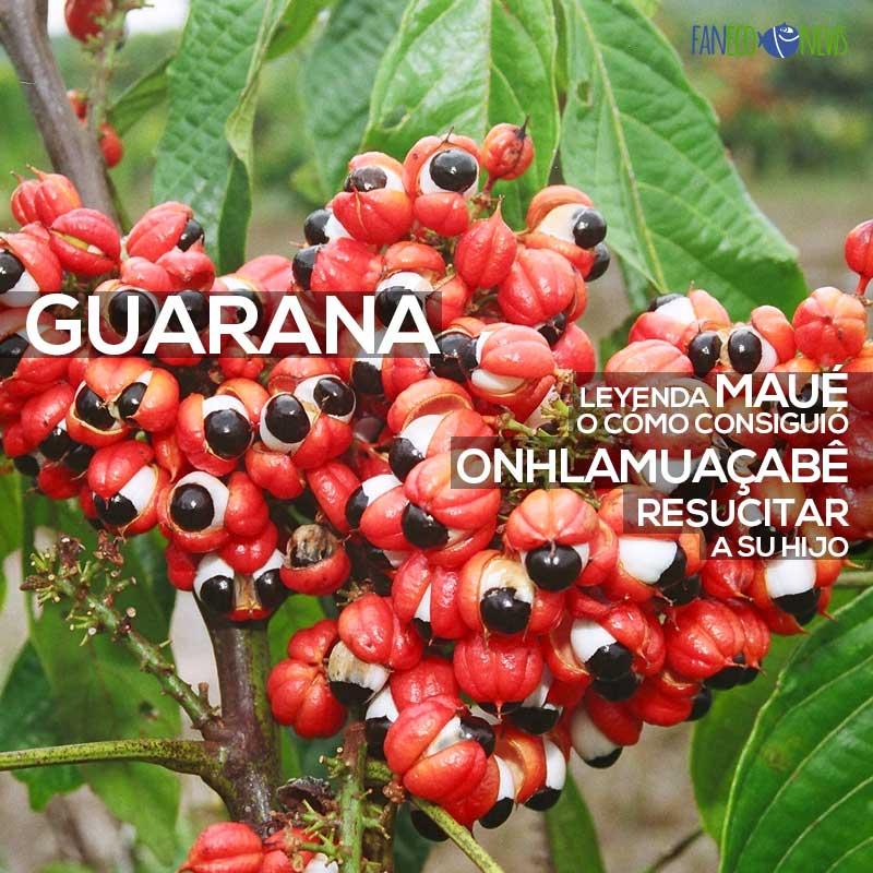 Leyendas y propiedades del guaraná.
