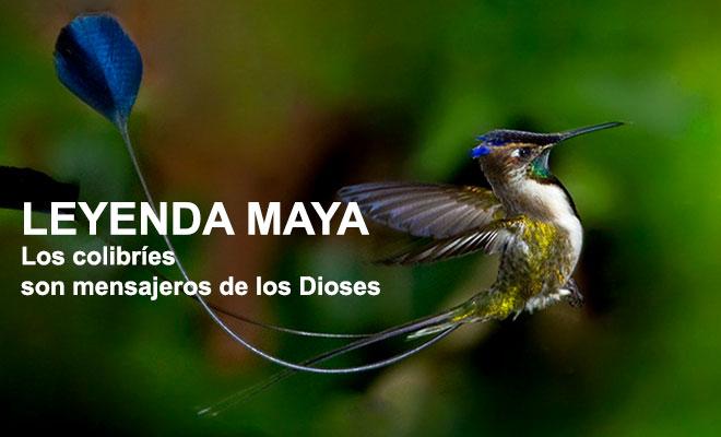 Leyenda Maya sobre los colibríes