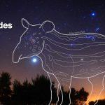 Hyades, aguacate y tapir